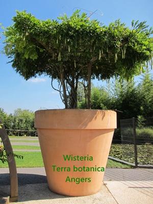 glycine Terra Botanica Angers