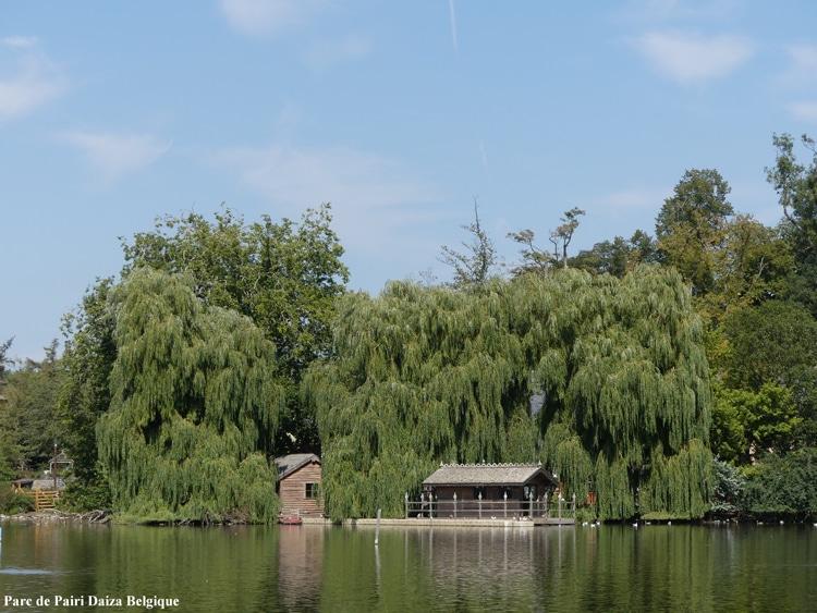 Saules pleureurs Parc de Pairi Daiza Belgique