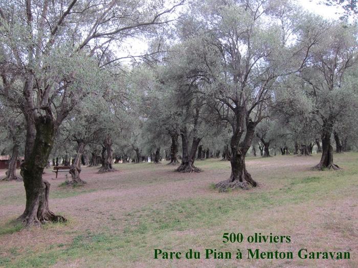 oliviers Parc du Pian Menton