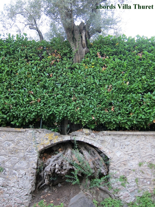 olivier Villa Thuret Cap d'Antibes