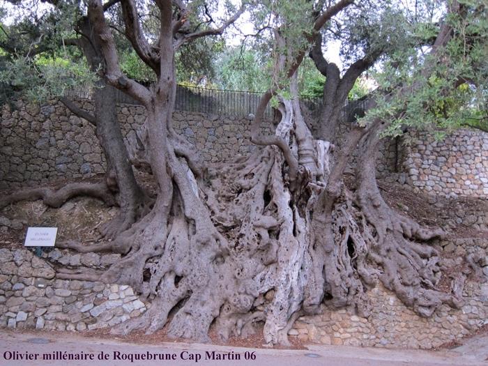 olivier Roquebrune Cap Martin 06