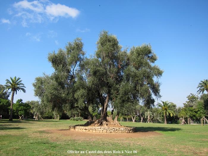 olivier Parc Castel des deux Rois Nice 06