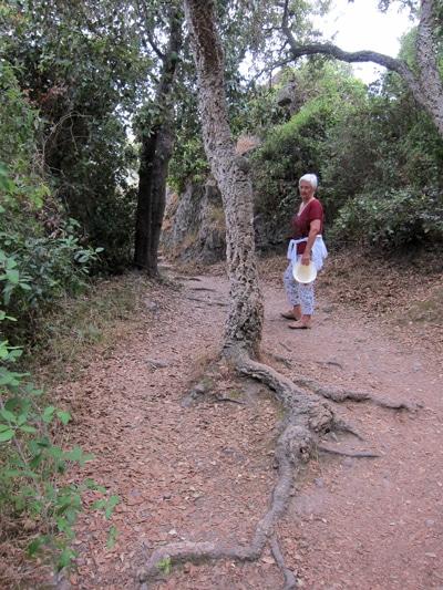 racines-chêne-liège