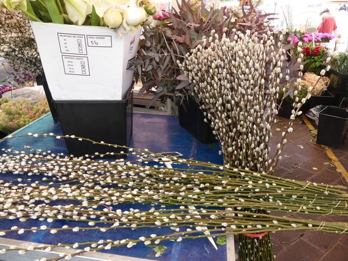bouquet de tiges de saule