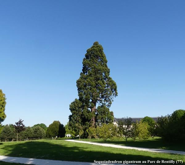 Parc de Rentilly (77)