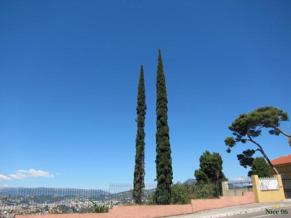 Cyprès de Provence Moyenne Corniche Nice