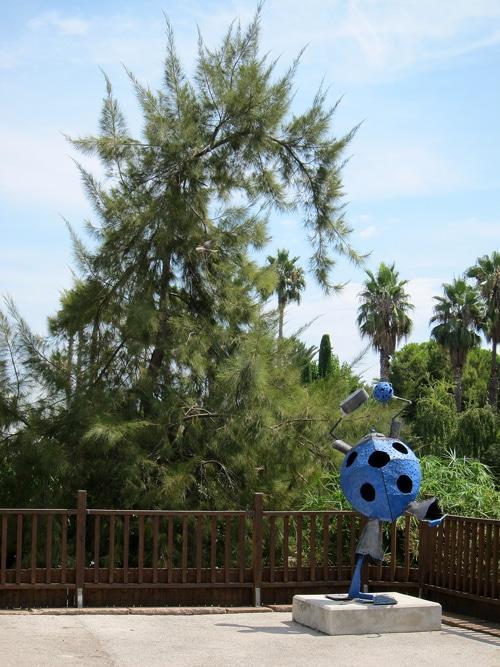 Casuarina au Parc Phoenix à Nice