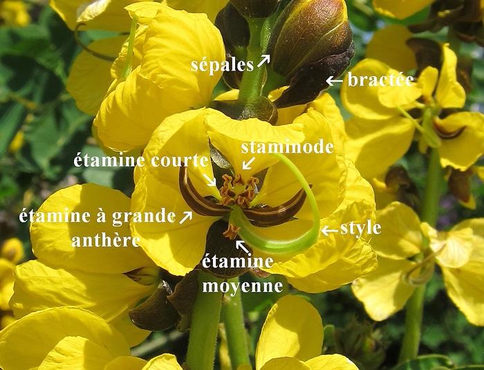 Sonication - Buzz pollination