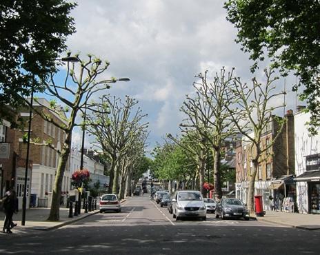 Platanes taillés à Londres